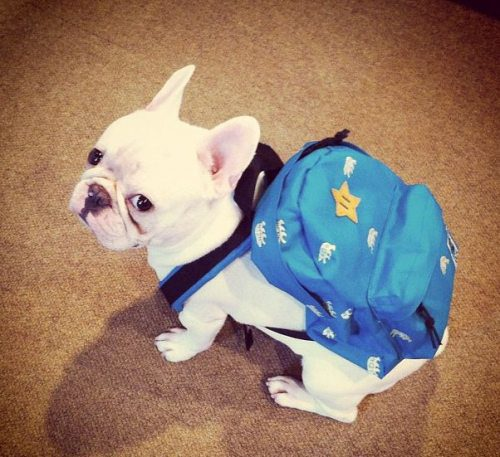 alphaq10:Butters ready for school